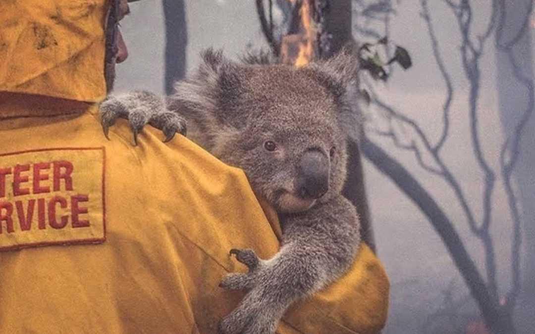 Australian Bushfire Relief